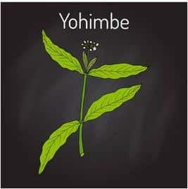 Yohimbe-Extract