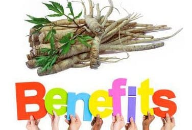 Benefits of Panax Ginseng