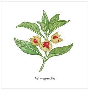 Ashwagandha Final Veredict